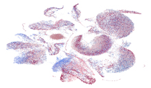 Picture of UMAP visualization of single cells from the gastrointestinal tract